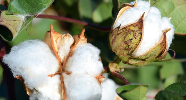 Tekstiileillä on moninaisia ympäristövaikutuksia